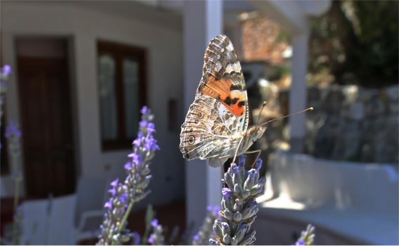 farfalla-viola